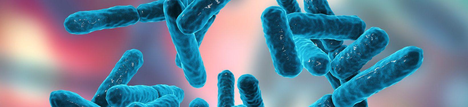 Zakład Diagnostyki Bakteriologicznej